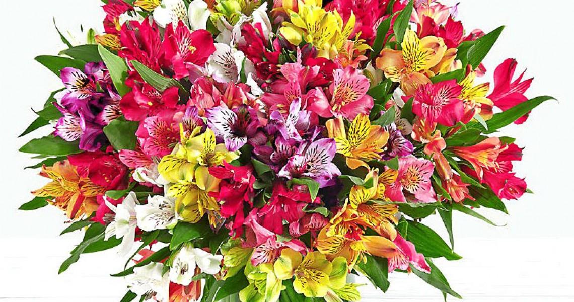 شاخه گل آلسترومریا