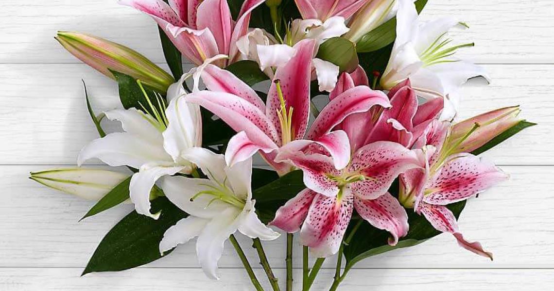 Lilium flower branch